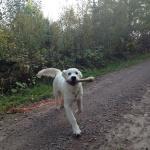 Bella går viltspår