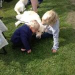 Får vi klappa hunden? Ja Tack säger Gizmo! :=)
