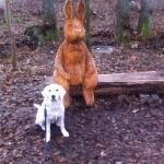 Nelly hittar en hare ;)