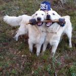 Alvin och Uno vill ha samma pinne! :)