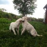 Lovis & Tindra busar :)