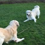 Jack och Gizmo leker