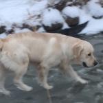Jack smyger över isen på dammen ;)