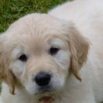 Teddy, Gizmo's son.