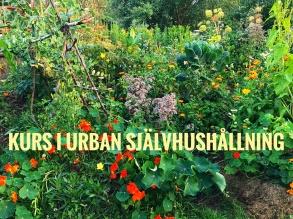 Kurs i Urban Självhushållning