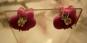 DÖDSKALLE LiLA med rosavit prickig rosett PiNS ÖRHÄNGEN ROCKABiLLY KAWAii