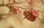 DÖDSKALLE LJUSROSA med rosavit prickig rosett PiNS ÖRHÄNGEN ROCKABiLLY KAWAii