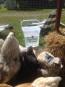 VATTENKOPP / NIPPEL och tillbehör tank/vinkelfäste till höns, kalkon, ankor, vaktel. DEKALER