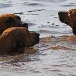 Våra tre tjejer badar sommaren 2014