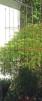 Växtstöd, Obelisk, fyrkant - Stor