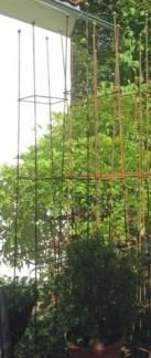 Växtstöd, Obelisk, fyrkant - Liten