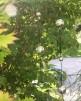 Trädgårdsdekorationer