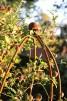 Växtstöd, Obelisk, rund