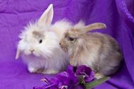 Några av våra fina kaniner
