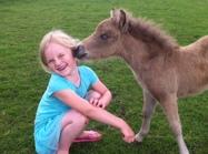 Träffa hästar, alpackor, grisar och många fler