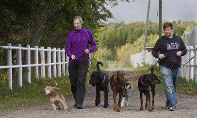 Hundar är välkomna på Pannkaksladan i Höganäs. Vi har till och med egen meny för hundar!