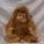 Orangutang ca 40 cm