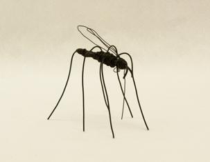 Mygga - Mosquito