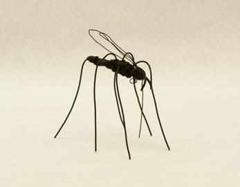 Mygga - Mosquito -