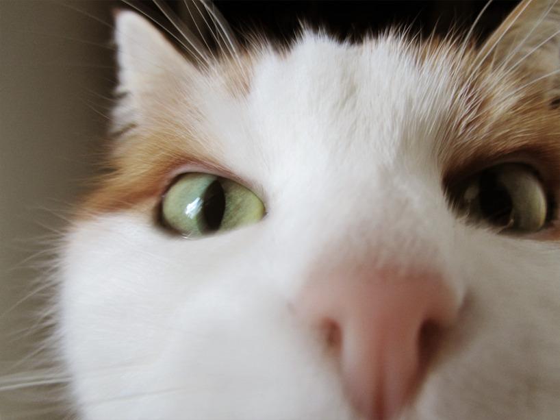 Min katt Olivia Lejonhjärta