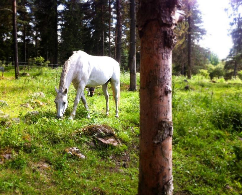 Häst i Hemlingby