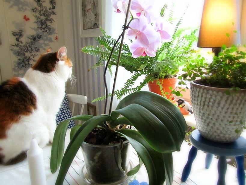 Olivia på köksbordet