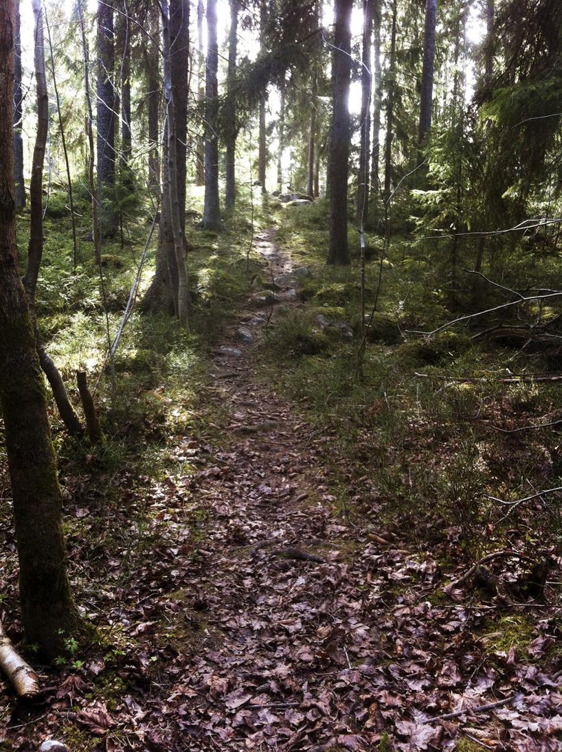Skogsstig