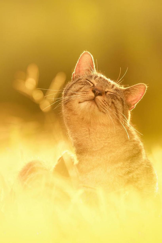 Katt i solen