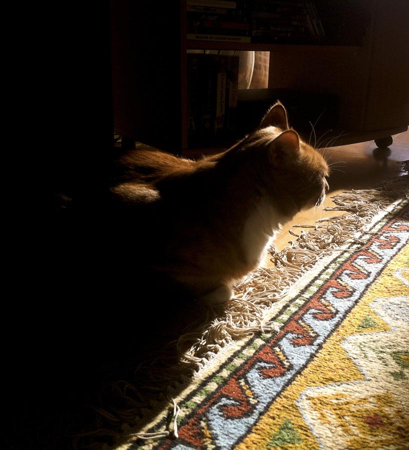 Katten Zingo