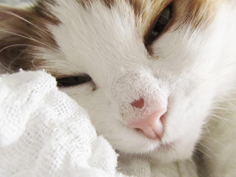 Olivia med sår på nosen