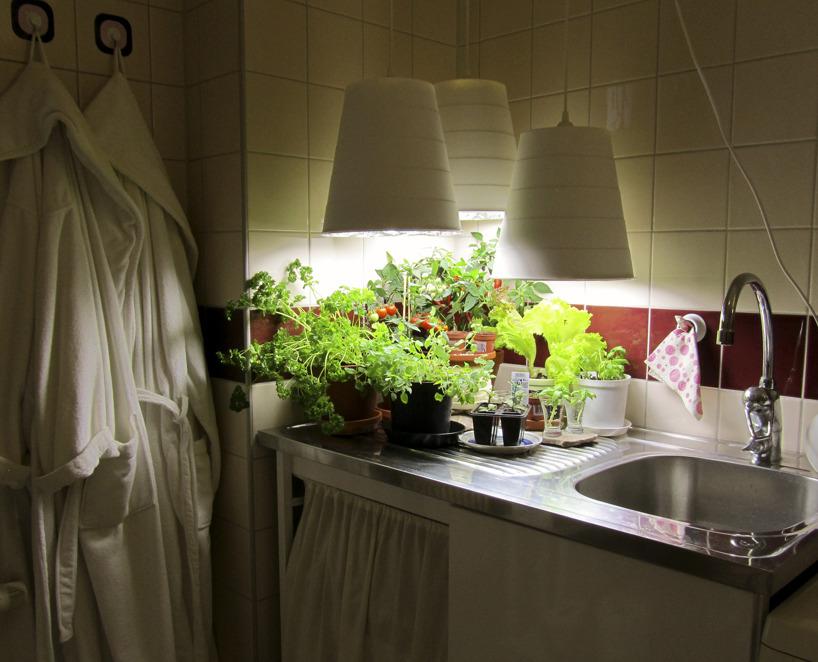 Grönsaker i badrummet