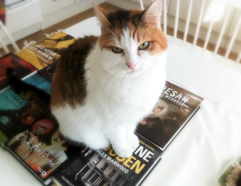 Olivia slår sig ner på de nyinköpta böckerna