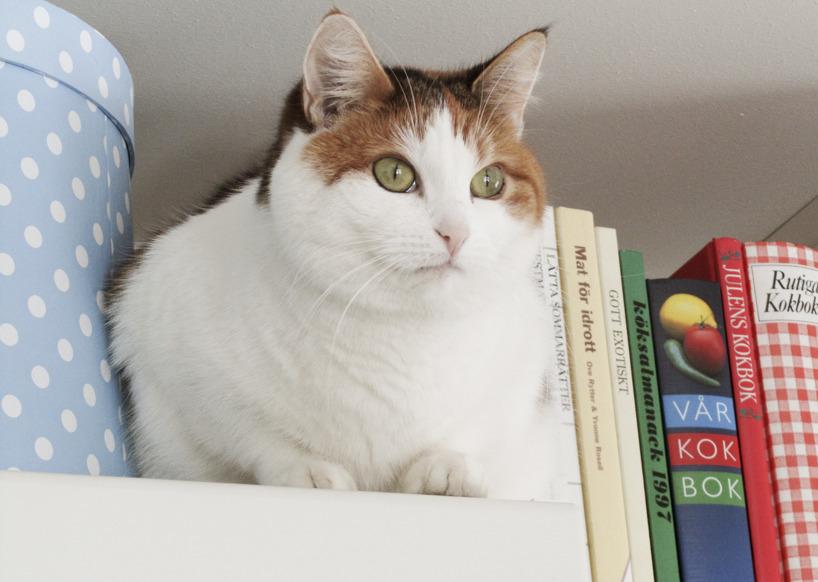 Olivia på köksskåpet
