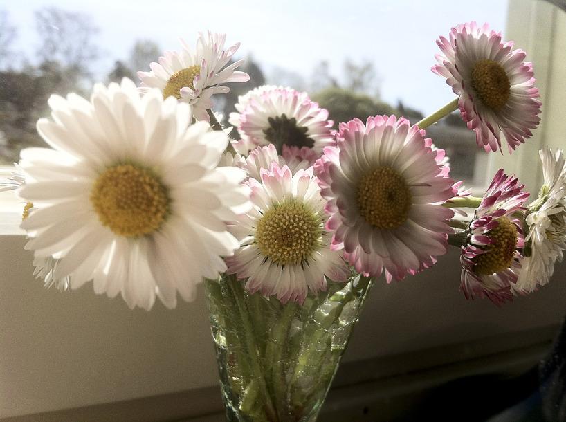 Små blommor i ett snapsglas