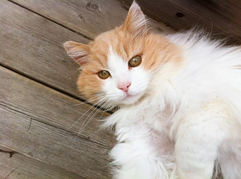 Katten Chabbe
