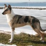 Lyxa 1år, 2