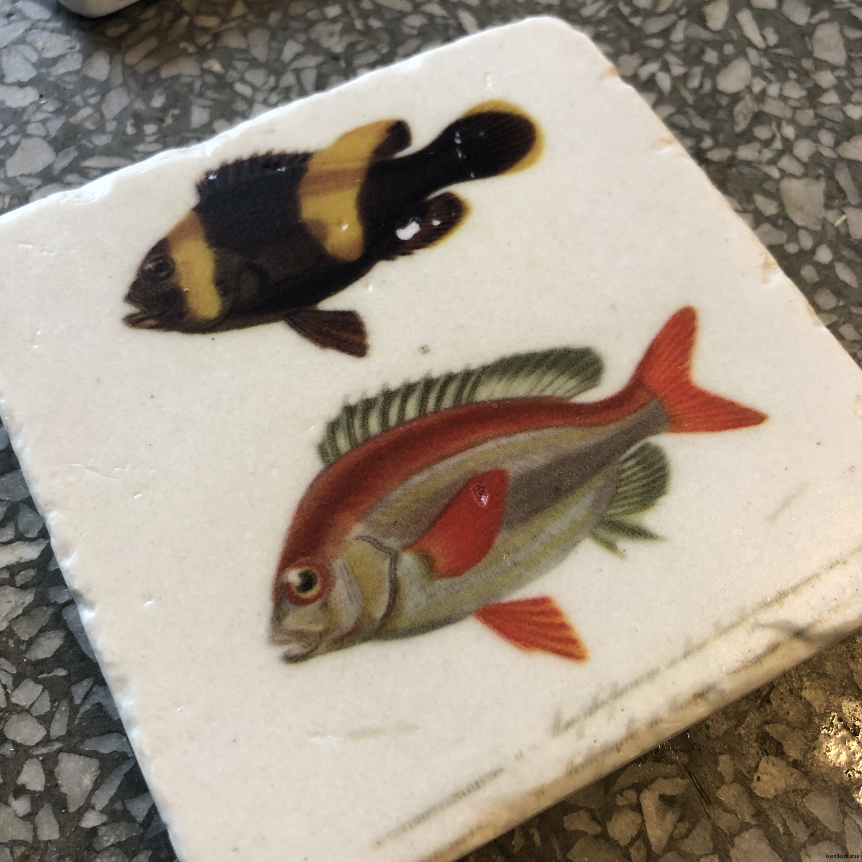 glasunerlägg fiskar3