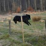 Casey hoppar!