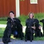 Johanna & Marie med hundar