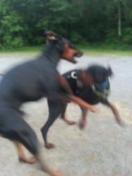 Under hundmöteskursen jobbar vi för mer harmoniska hundmöten!