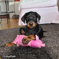 På valpkursen lägger man grunden för en god relation mellan dig och din hund!
