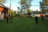 På hundkursen tränar vi i grupp.