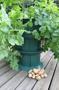 Odlingssystem för potatisodling på höjden.