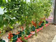 Odlingssystem (odla direkt i jordsäcken!)
