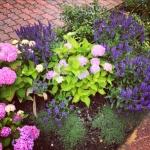 lavendel, hortensia, ros