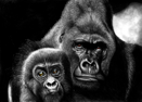 Gorilla with cub