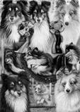 Lindas Hundar