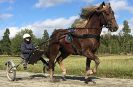 Klockar Rune och Emelie under ett träningspass 18 september 2018.
