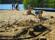 sandkakor
