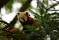 20 Panda Nordens Ark
